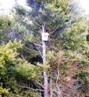 Bait station in totara tree for AHB possum control